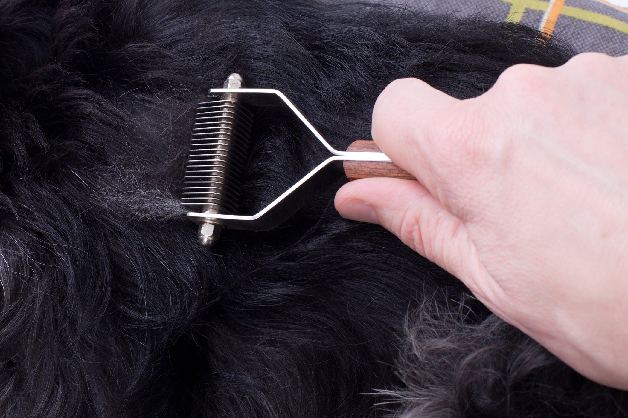 Những cách tự nhiên làm giảm rụng tóc & mọc trở lại